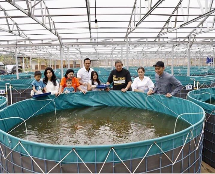 Cara Budidaya Ikan Koi Kolam Tanah - InfoAkuakultur.com