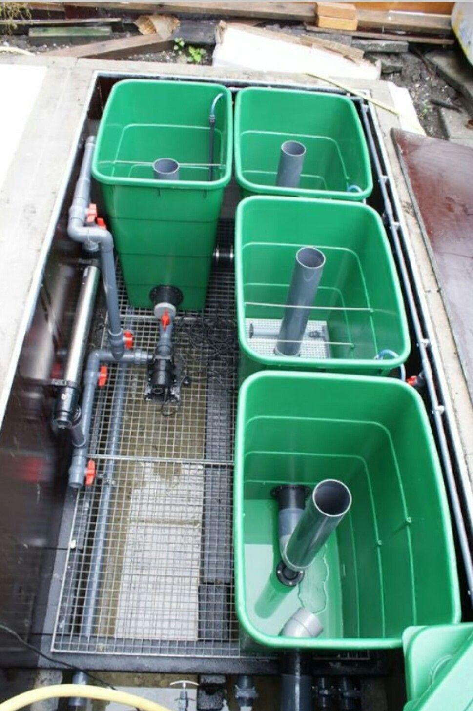 Filter Air Untuk Perkembangan Ikan