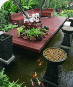 Kolam Koi Outdoor