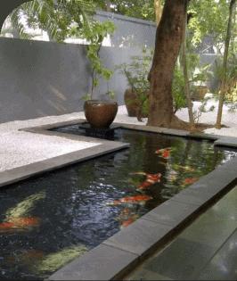Kolam Koi Sederhana
